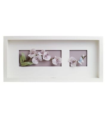 Natural Orchids - Wall Art